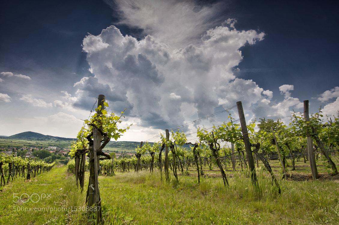 Photograph Wachau by Christoph Maderthaner on 500px