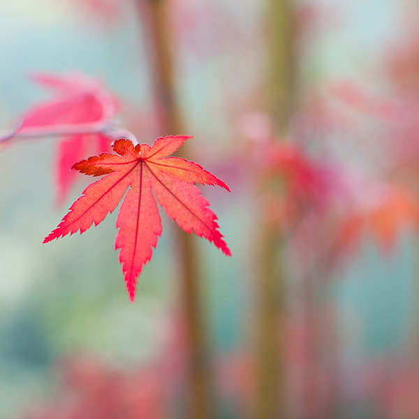 Photograph autumns pastel... by brilorenz on 500px