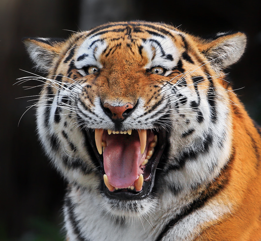 Photograph Here is your Smile by Klaus Wiese on 500px