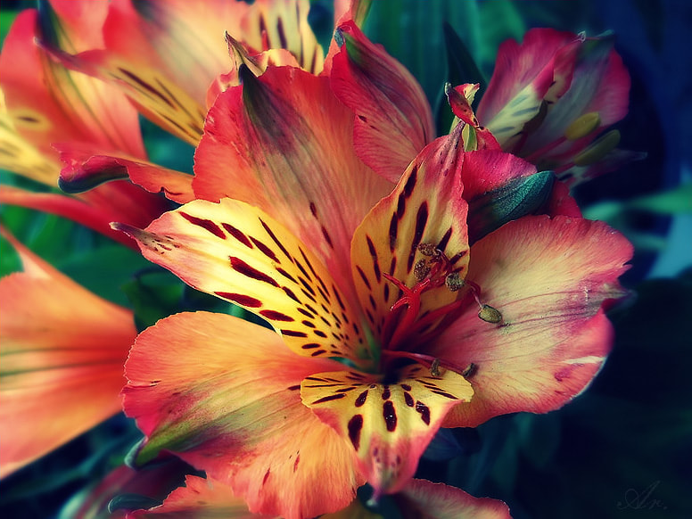 Photograph Flowers by Areka Bulgaria on 500px