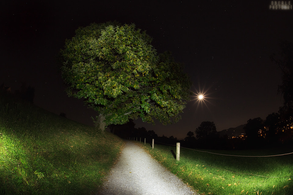 Photograph night walk by Frank & Judith Oberle on 500px