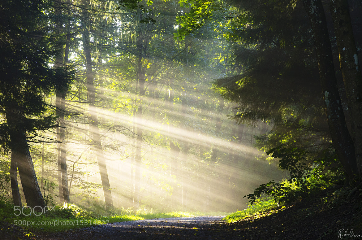 Photograph Let there be light by Robin Halioua on 500px
