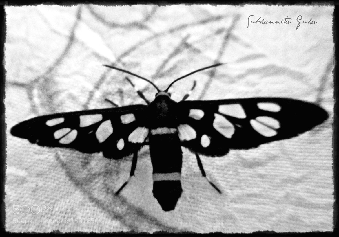 Photograph The Moth by Subhannita Guha on 500px