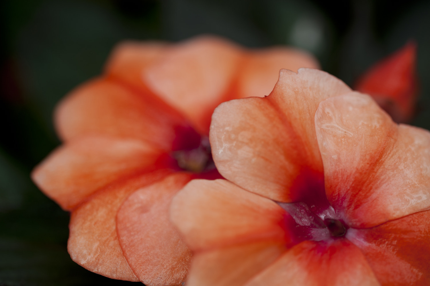 Photograph Flower by Mark  on 500px