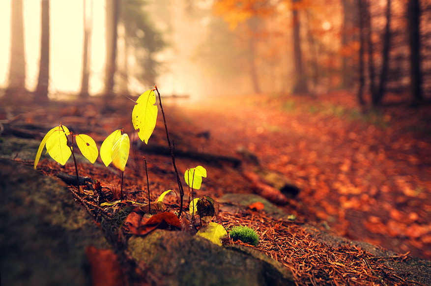 Photograph Small Autumn by Kilian Schönberger on 500px