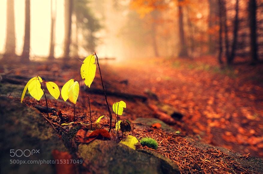Photograph Small Autumn by Kilian Schönberger on 500px