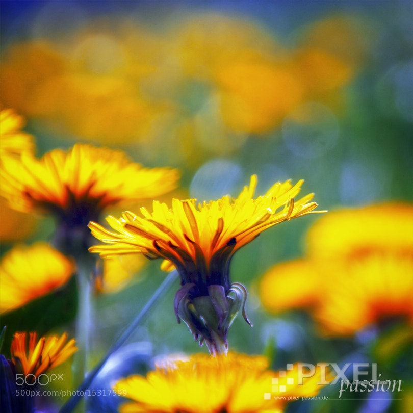 Photograph summer dream by Pixel Passion on 500px