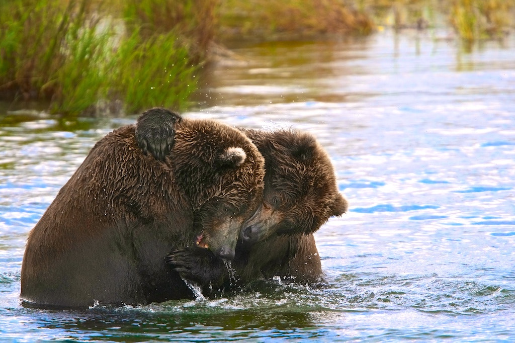 Photograph Brotherly Love by Buck Shreck on 500px