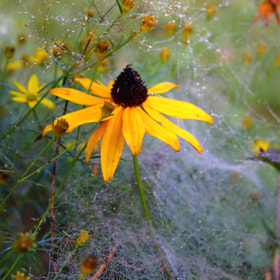 Yellow Web Flower I by Sascha Böttcher (sashahasha)) on 500px.com