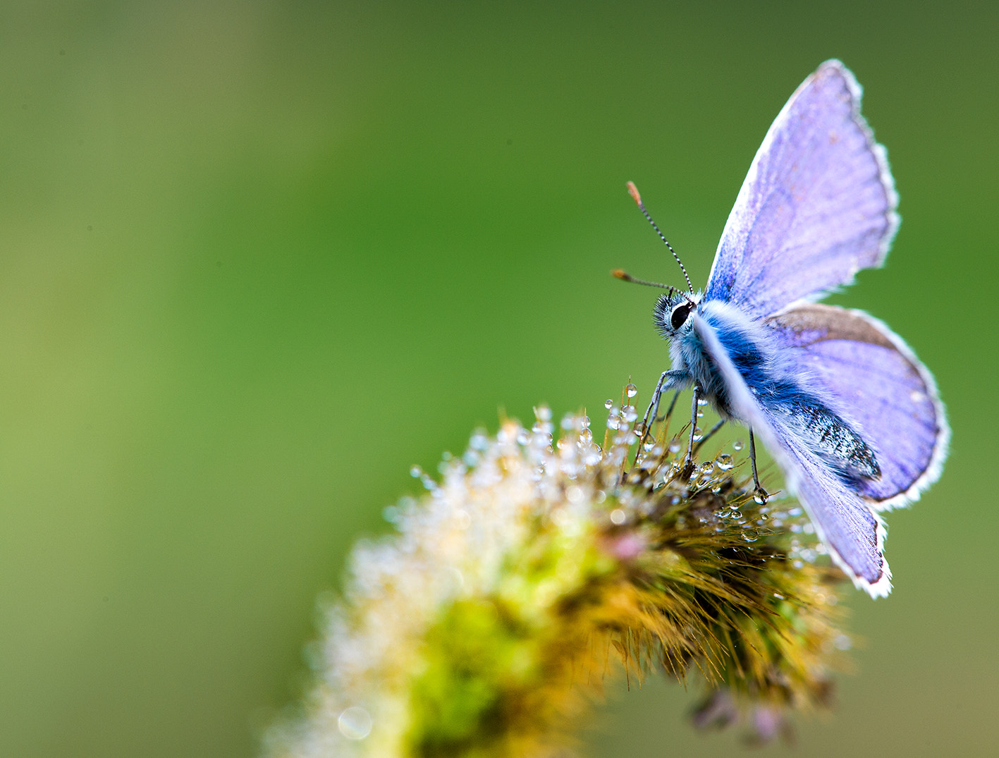 Photograph Punk Butterfly by Max Rinaldi on 500px