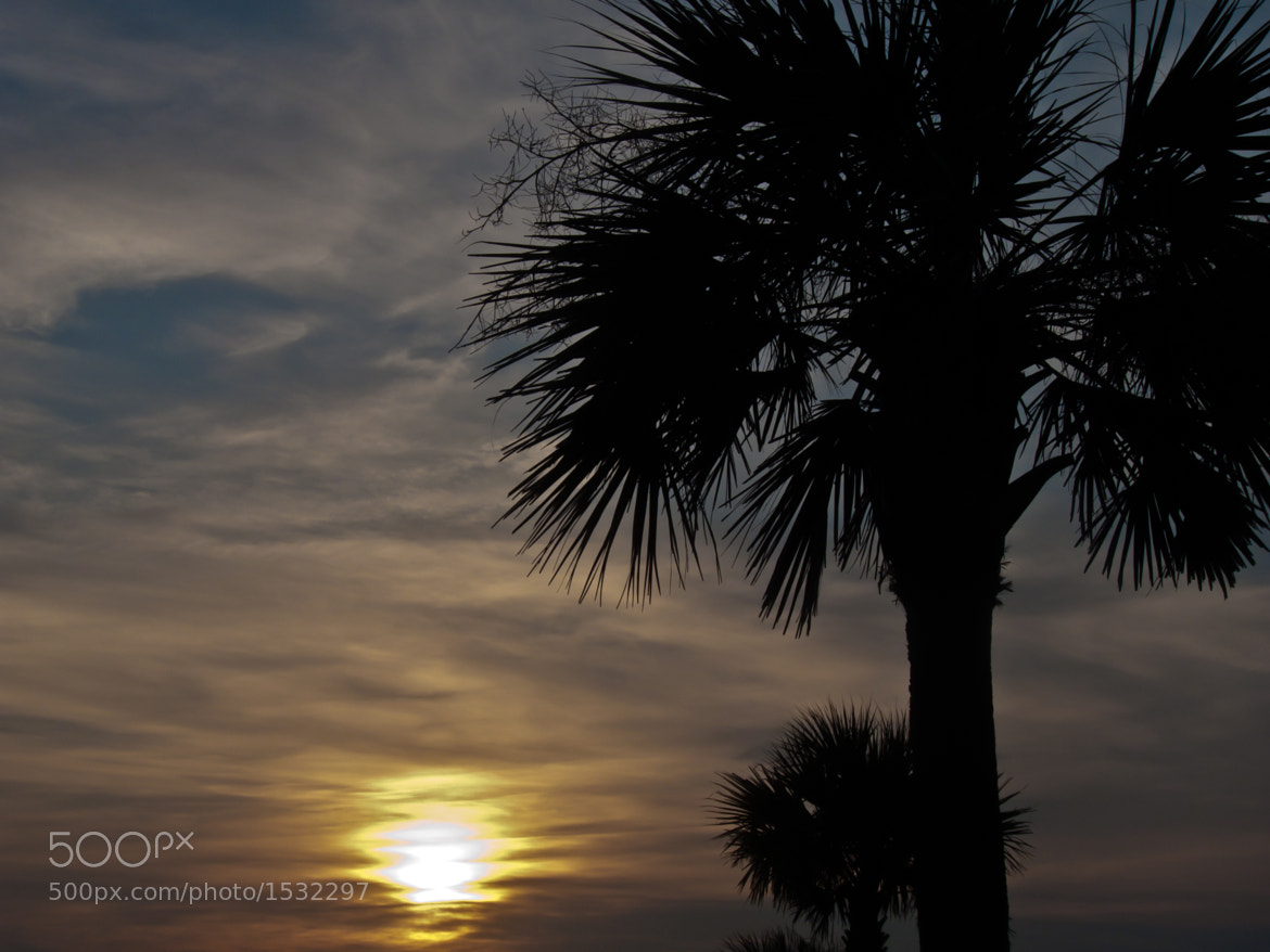 Photograph Palmetto in the Rising Sun by Andy Whitfield on 500px