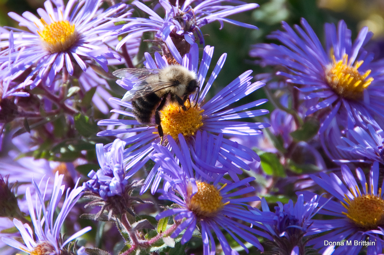 Photograph Don't Worry, Bee Happy by Donna Brittain on 500px