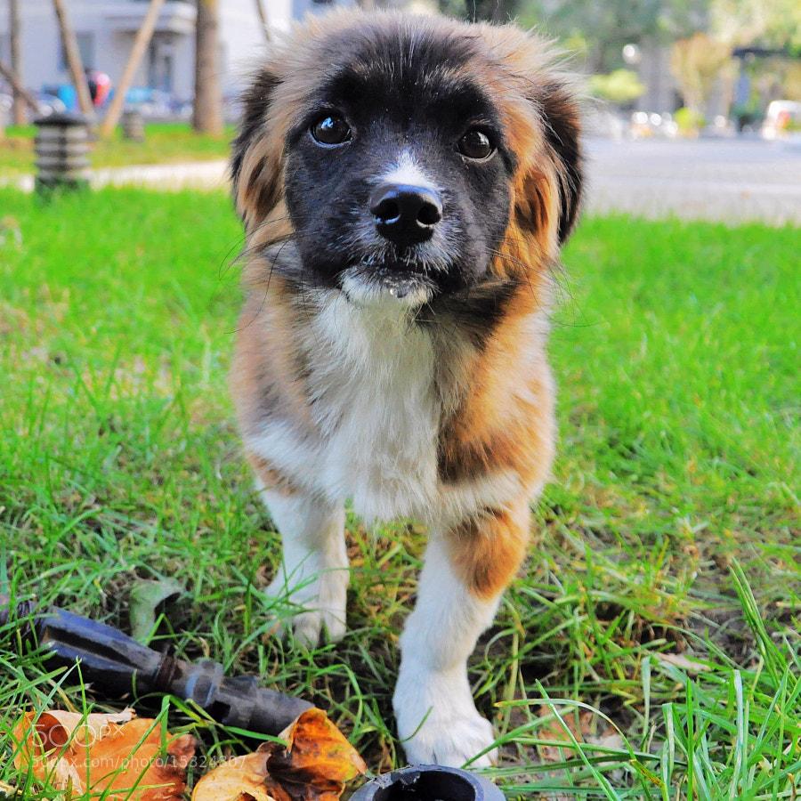 Doggy by Joe Navorski (pxxx) on 500px.com