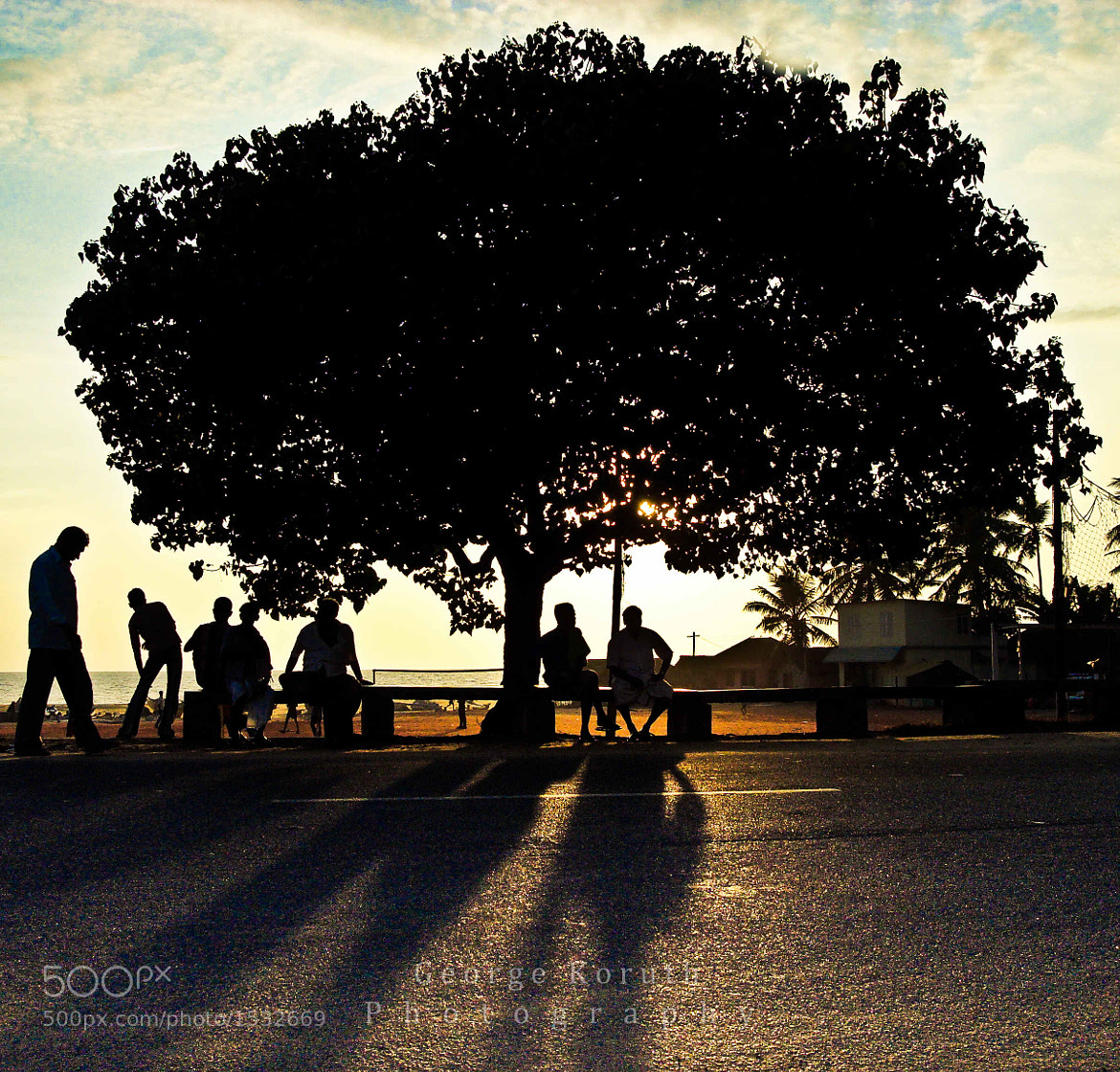 Photograph Tree of Life by George Koruth - fotobaba on 500px