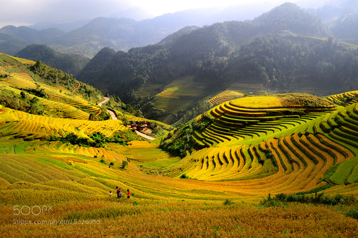 Photograph Mu Cang Chai fields by Cao Minh on 500px