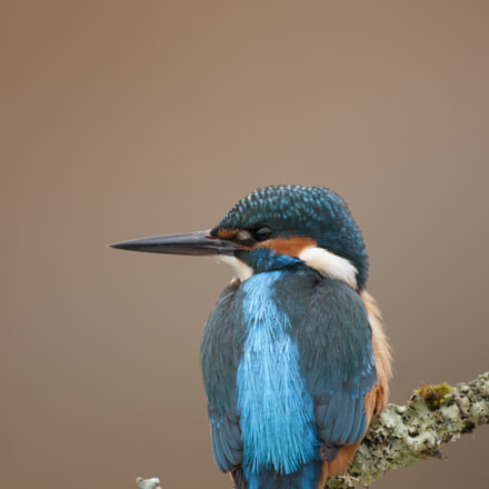 Common Kingfisher_000000879779_1, Sony DSLR-A700