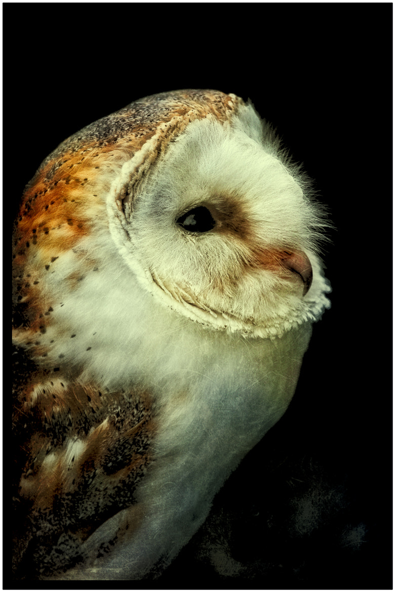 Photograph  The Wise Old Owl by clint hudson on 500px
