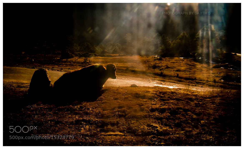 Photograph Through the dirty car window by Sajith S on 500px