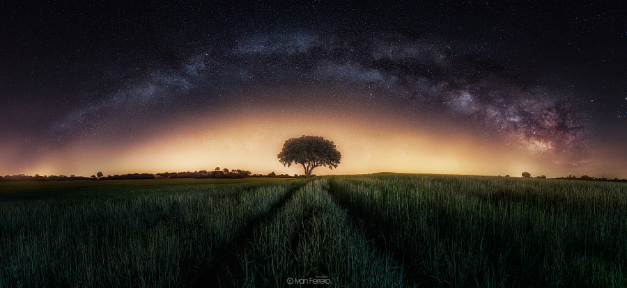 Milky way and tree by Iván Ferrero on 500px.com