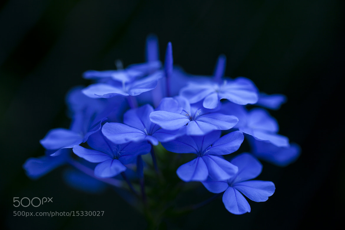 Photograph Blue    I by DEW SP on 500px