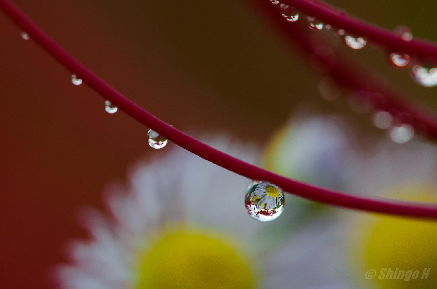 Photograph drops by Shingo Hama on 500px