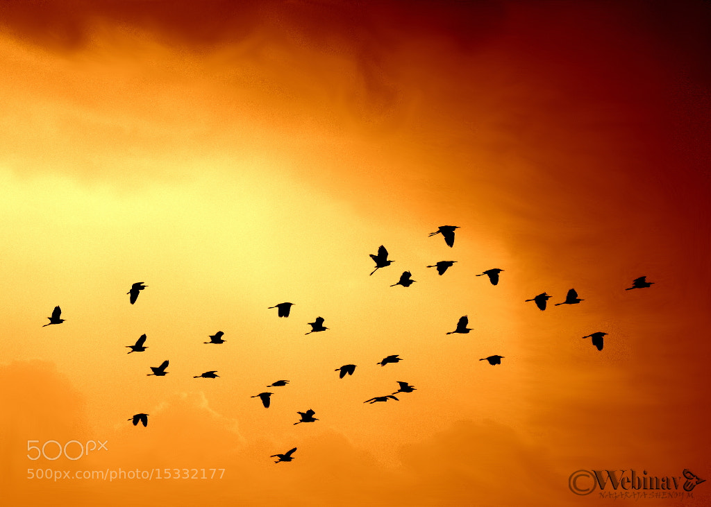 Photograph Flying home by Nagaraj Shenoy on 500px