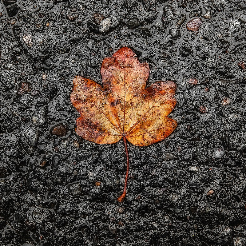 Photograph Asphalt Tree by Malte B. on 500px