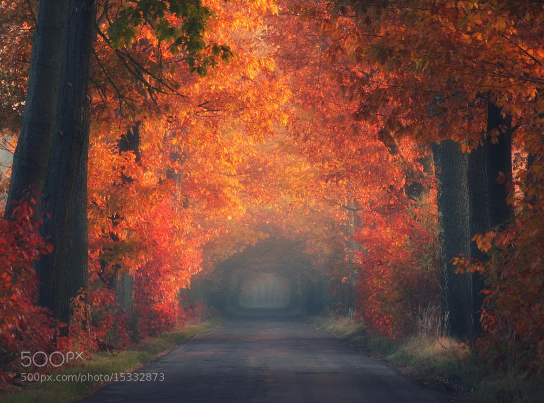 Photograph Autumn by Paweł Uchorczak on 500px