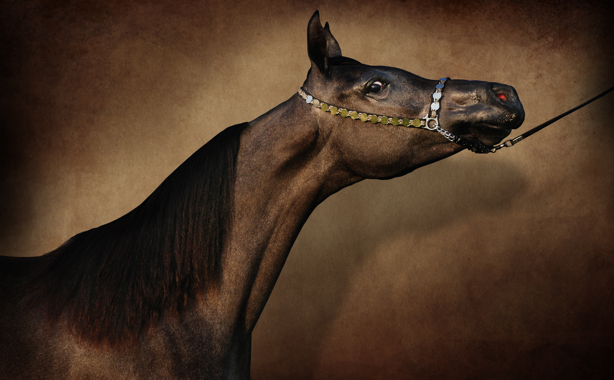 Photograph ARABIC HORSE by Mohamad Hommadi on 500px