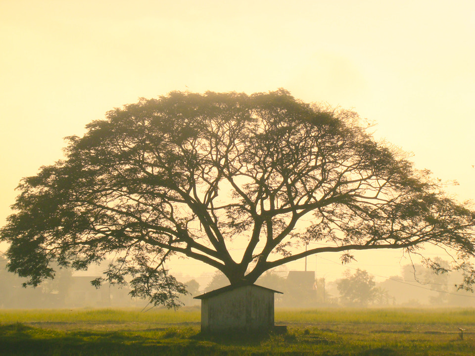 Photograph Country side by Nguyen Nguyen on 500px