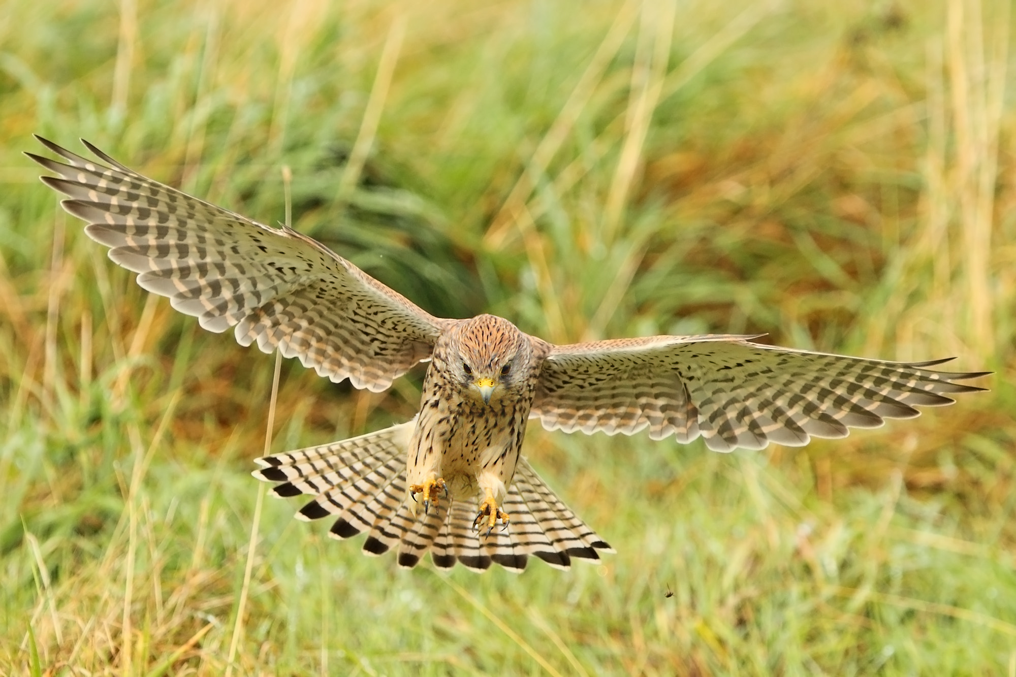 Photograph Talon-ted by Steven Ward  on 500px