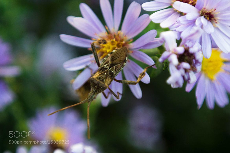 Photograph The bug by Akidzuki Borenkov on 500px