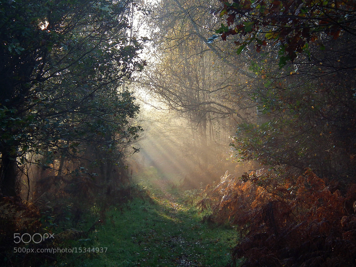 Photograph Untitled by Marina Taylor on 500px