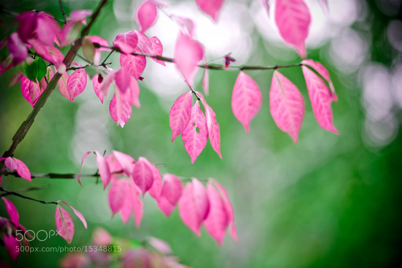 Photograph Autumn brightness by Marina Chirkova on 500px