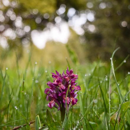 Flower in the field