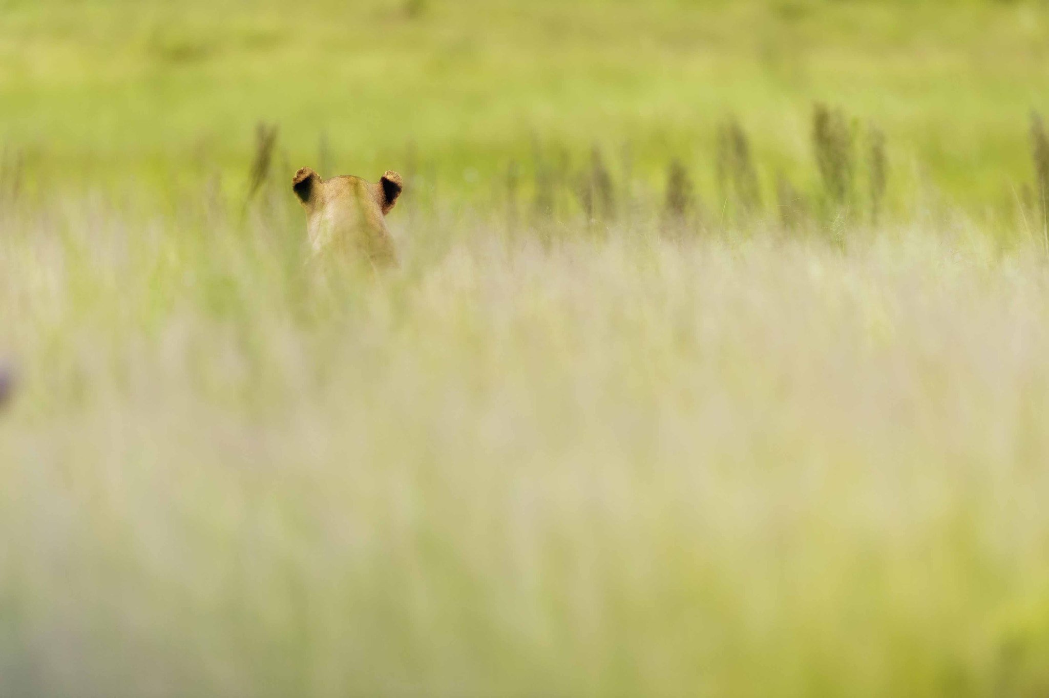 Photograph A game of waiting by Jitendra Sharma on 500px