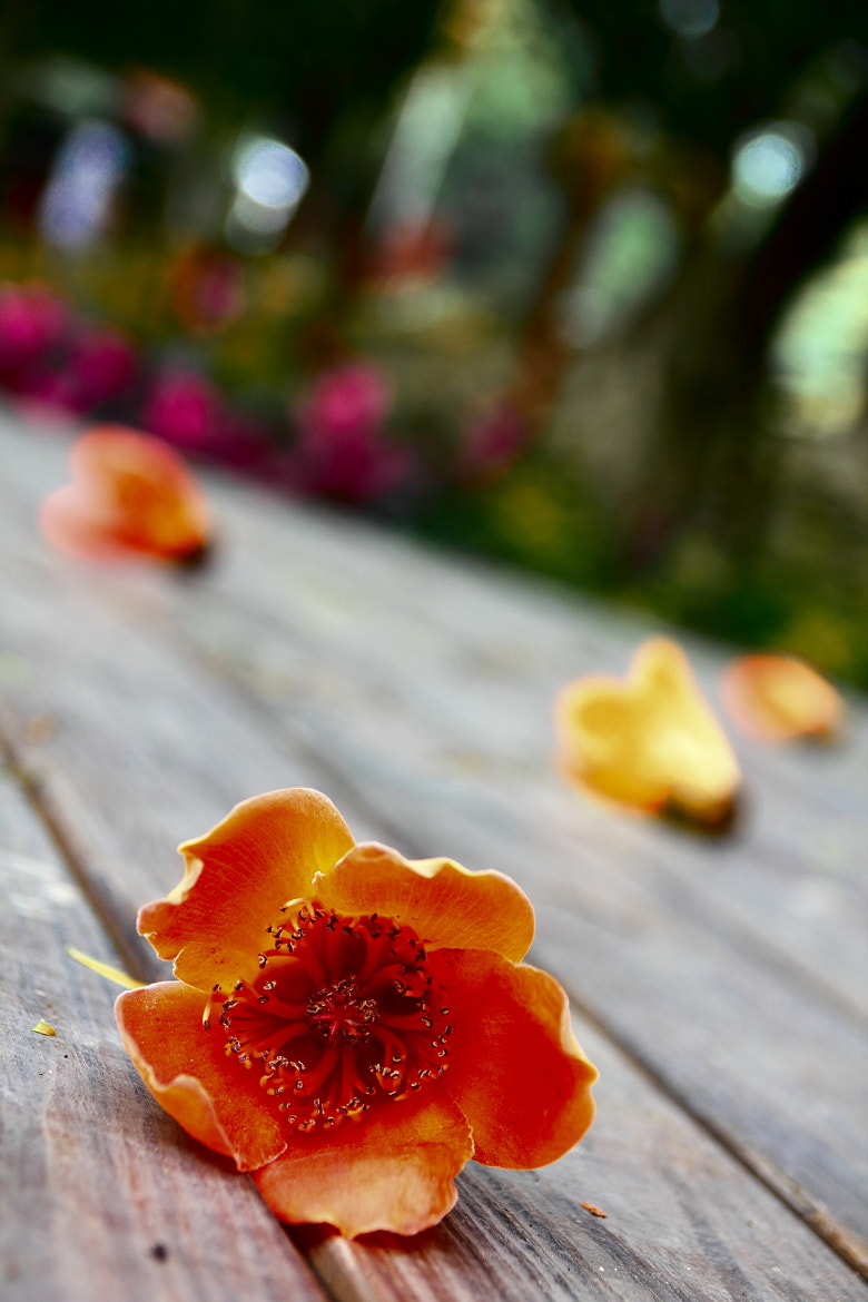 Photograph Fallen flowers by Chen Huang-Yung on 500px