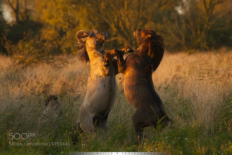 Photograph Fightclub... by Servee Wijsen on 500px