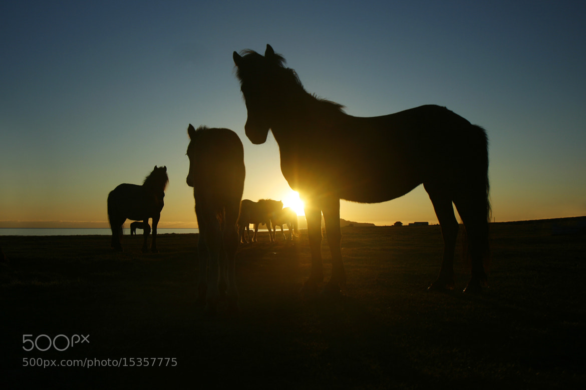 Photograph Horses as silhouettes  by Jon Hilmarsson on 500px