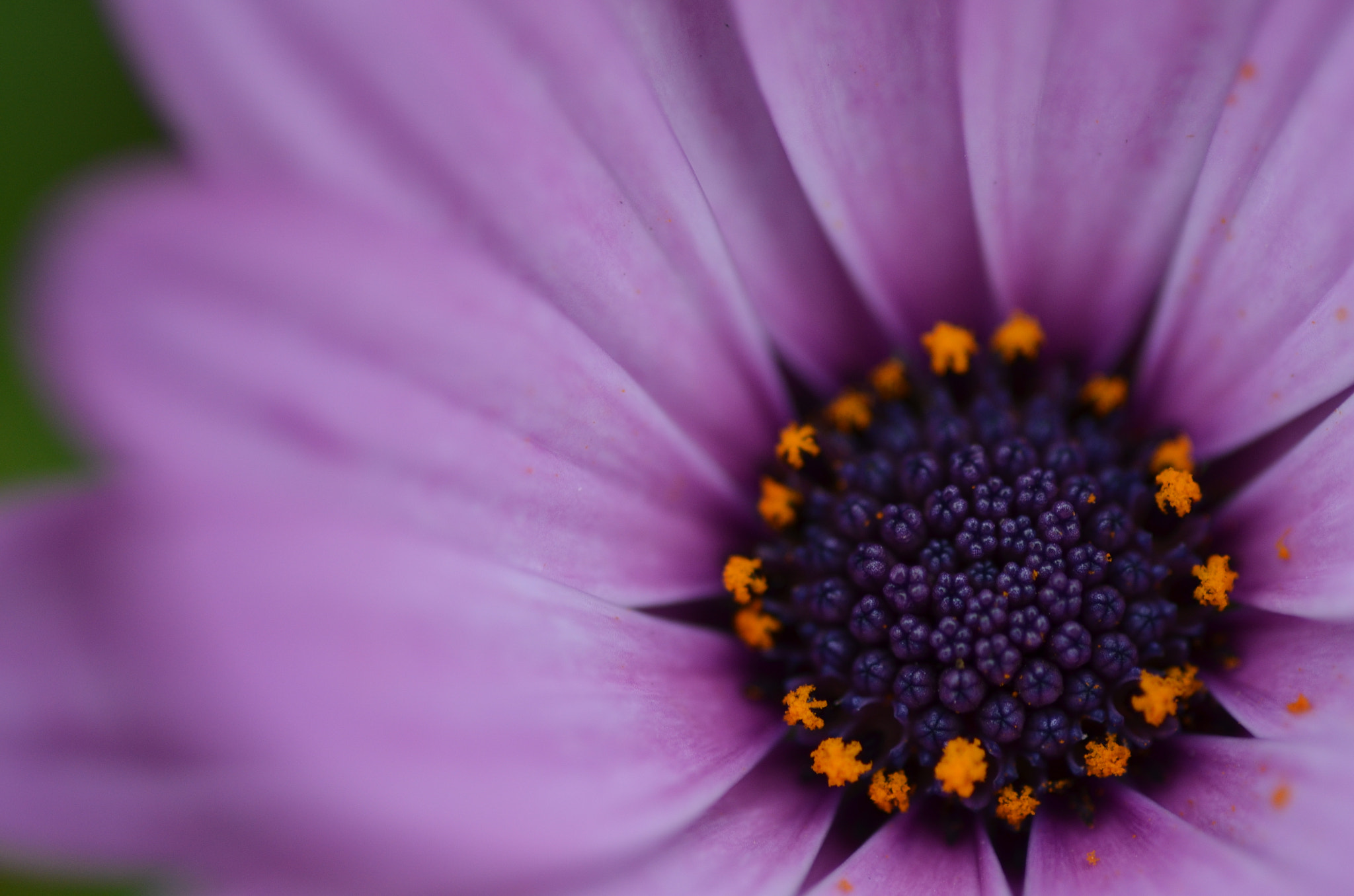 Photograph Purple by ISAO YOSHIZU on 500px