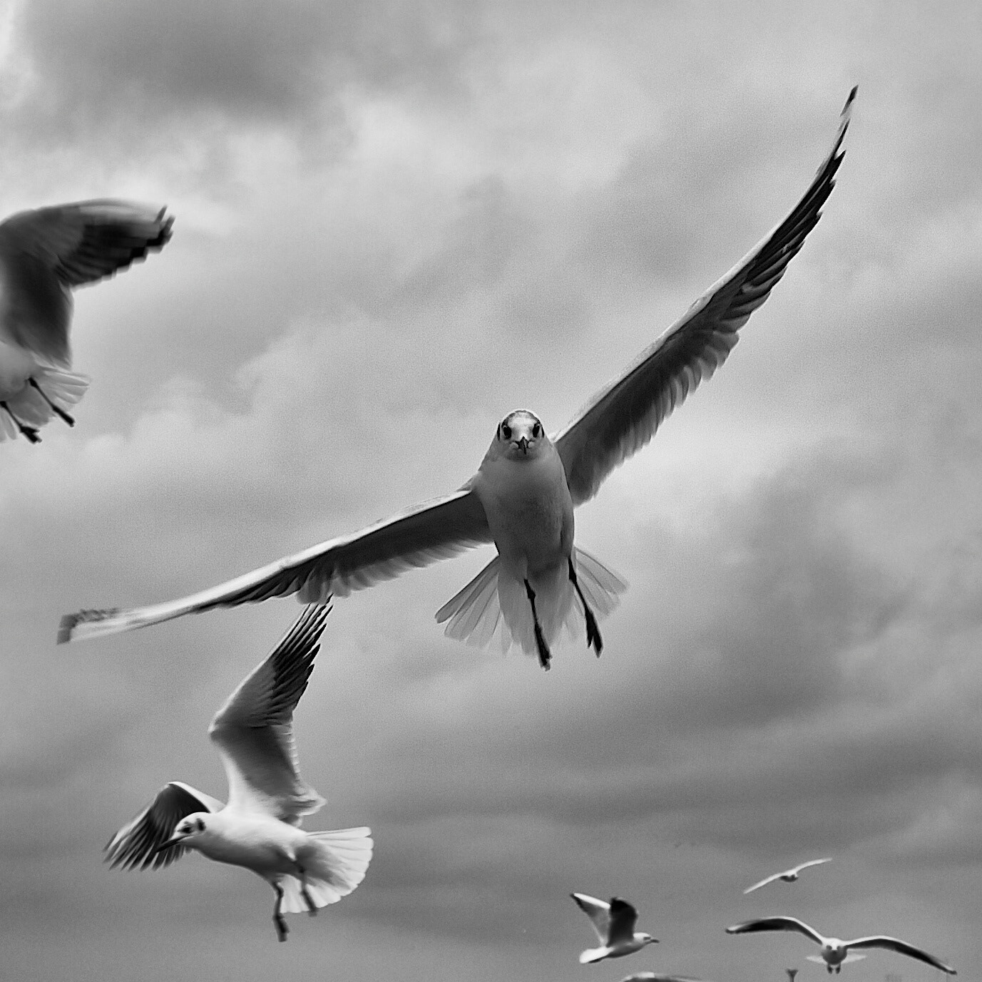 Photograph In flight by Laurence Migne-Peugeot on 500px