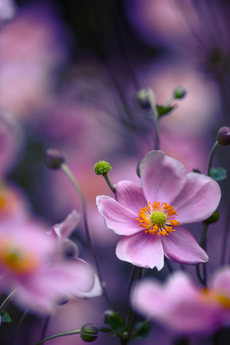 Photograph Untitled by EMIKO Ito on 500px