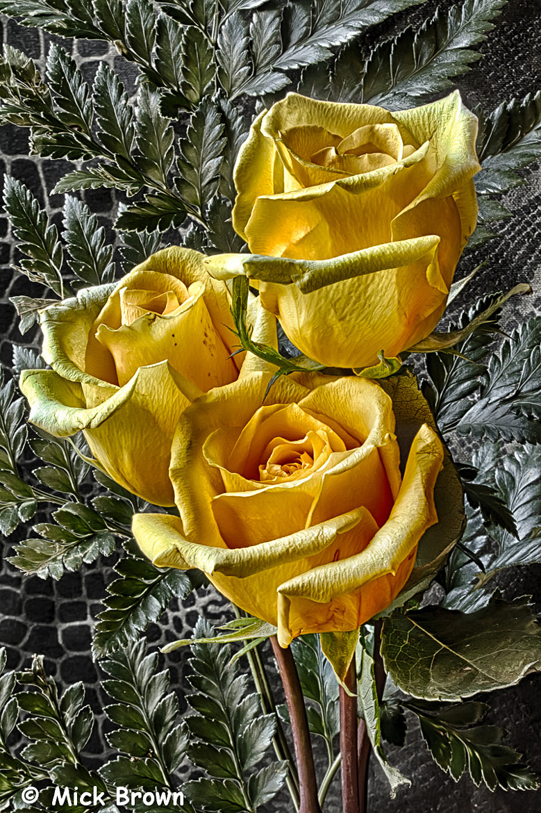 Photograph Yellow Rose 5892 HDR by Mick Brown on 500px