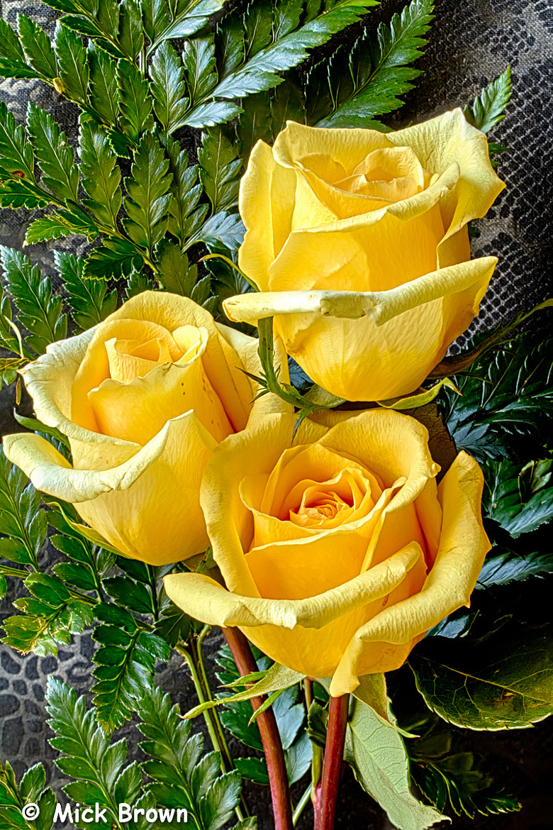 Photograph Yellow Rose 5889 HDR by Mick Brown on 500px