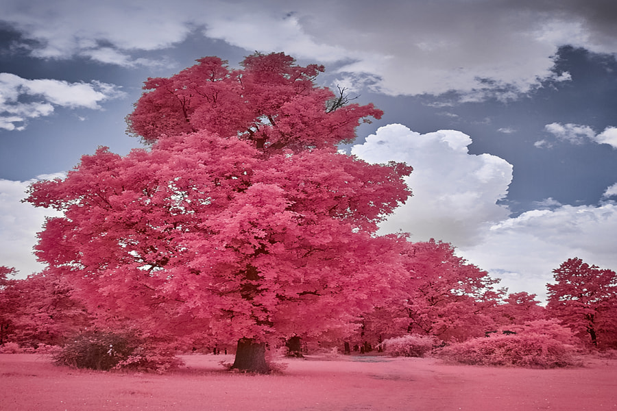 Spring forest (IR), the author - Costin Mugurel on 500px.com