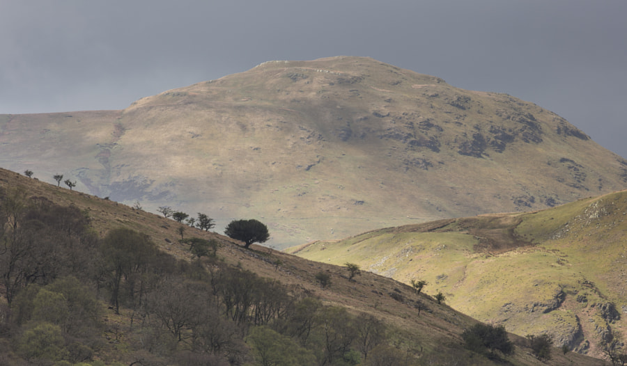 Silhouetted tree on Rannerdale Knott