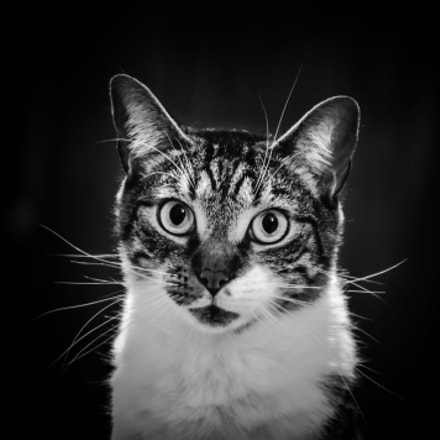 Ich Bin Ein Cat