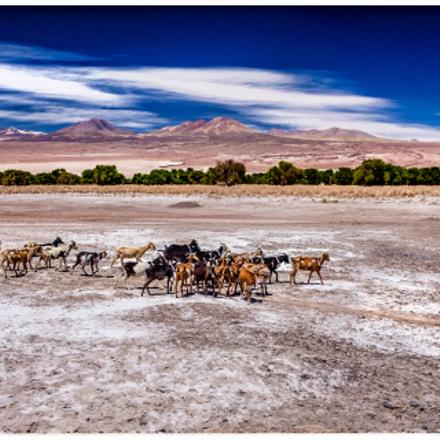 In the desert of Atacama