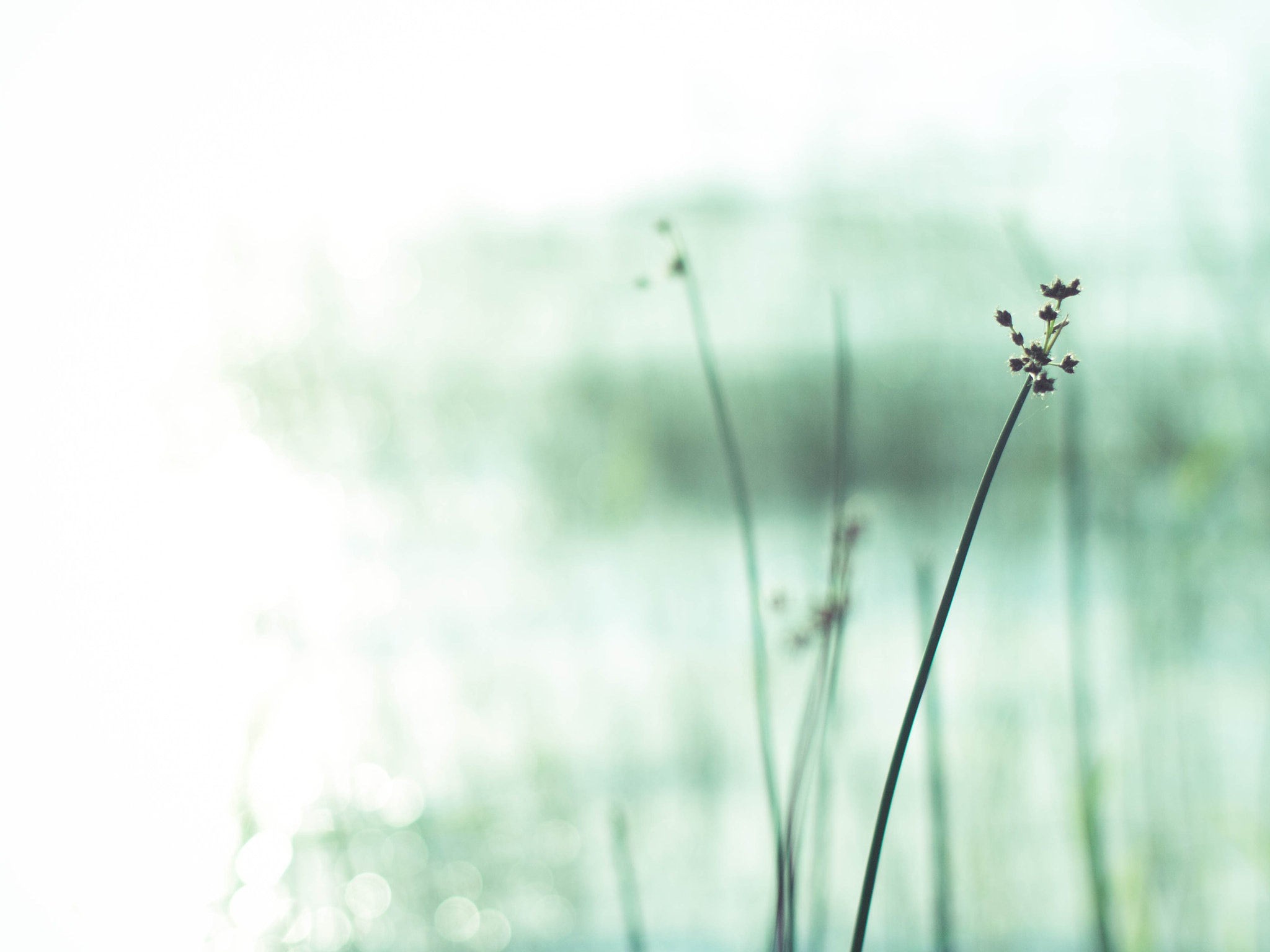 Photograph A Memory by Maria  Soderlund on 500px