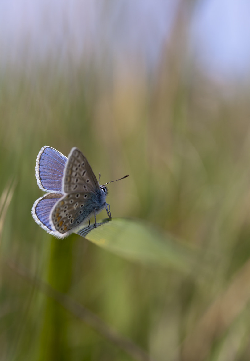 Photograph On my blade of grass. by Lucile  Tillet on 500px
